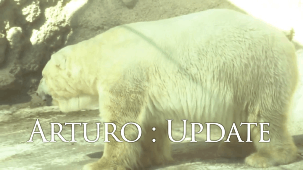Arturo Update: The Mendoza Zoo