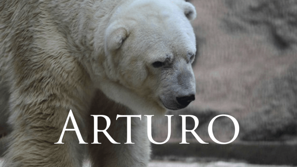 Arturo the Polar Bear 'going insane'